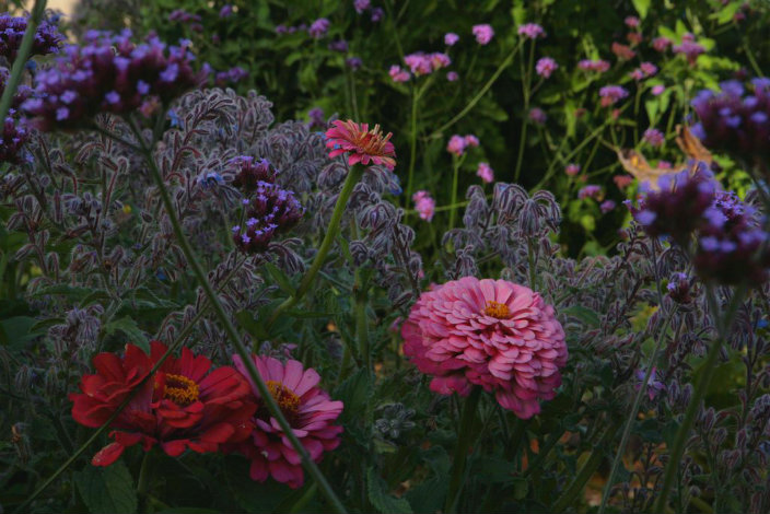 lawn-garden30