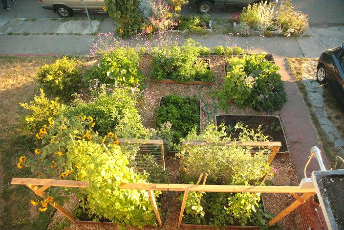 lawn-garden33
