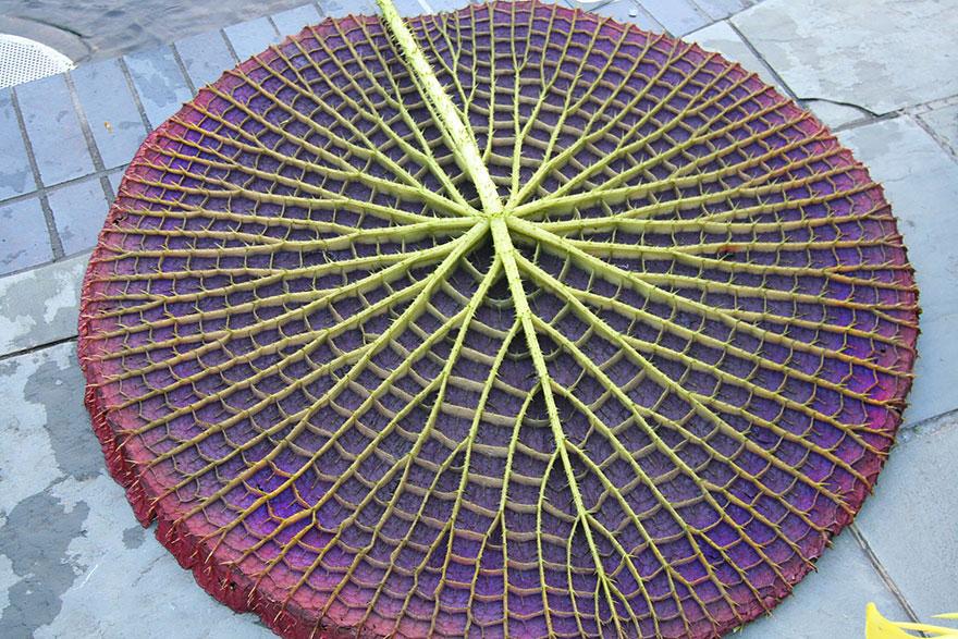 20個美到會讓人頭暈的驚奇「幾何圖形植物」。
