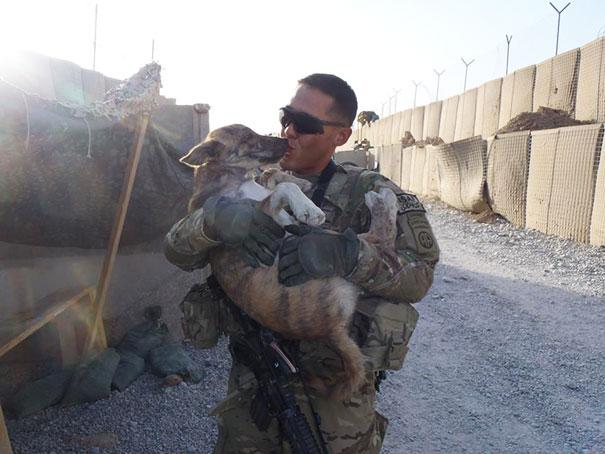 20隻和飄洋過海打仗的軍人成為家人的超療癒小動物!