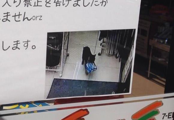 日本的貓咪真的有很多奇妙的習性,像是先前的...竊取便利商店東西。(還被懸賞責難。)