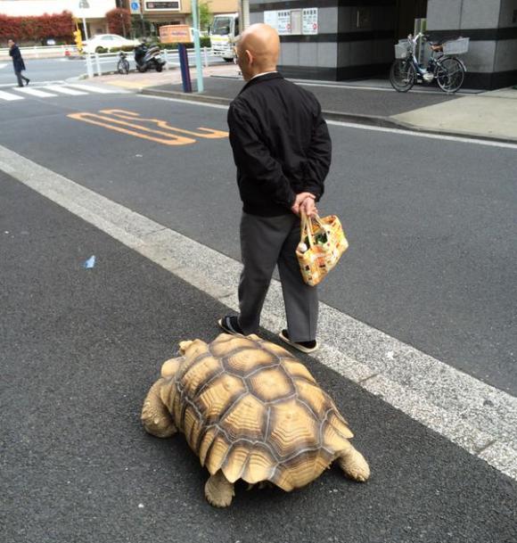 沒有人想得通為什麼這位老爺爺每次出去溜寵物都花這麼久的時間,但等他們看到後就完全懂了...