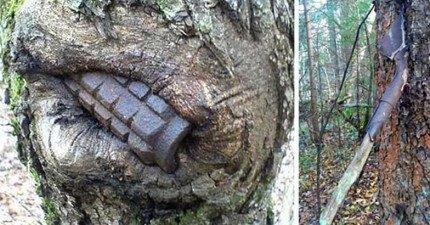 餓昏的俄羅斯「森林」把第二次世界大戰的武器都「吞了」... 森林搖身一變成了「戰後博物館」!