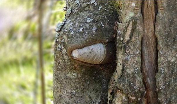 ww2-weapons-helmets-stuck-in-trees-7