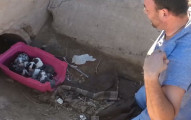 他們收到民眾電話說在公路上看到一條懷孕的母狗,結果到附近卻在下水道聽到薄弱的哭聲...