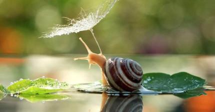 14個動物撐傘的天然完美瞬間,看完後就算討厭雨天的人也會每天(ღˇ◡ˇ)♡!