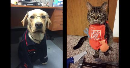23隻努力在職場上打滾的辛勞寵物,讓他們的可愛帶你的事業到下個高峰吧!