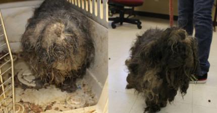 收容所在門口發現這隻被棄養的的可憐毛球,直到他們替她剃毛後才蹦出一隻超可愛寶貝!