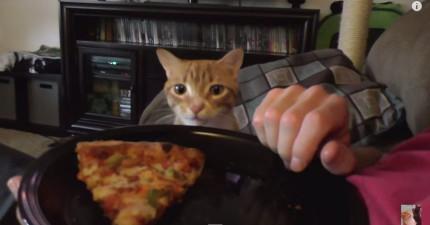 別想要在這隻貓咪附近吃美食,因為...你想要也很難啊!