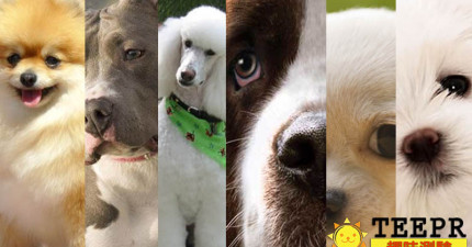10個問題檢測出如果你是狗狗的話,你會是哪一種?