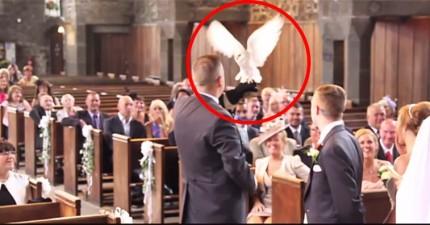 當新郎新娘要交換戒指時,這隻雪白貓頭鷹就從魔法世界飛來見證愛情了!