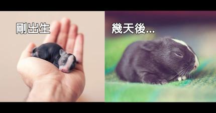 他把他的寶貝小兔子成長過程的30天都記錄下來,完全沒想到會這麼感動人心!
