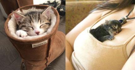 30隻絕對比你會找地方睡的「突破空間極限的貓咪」。
