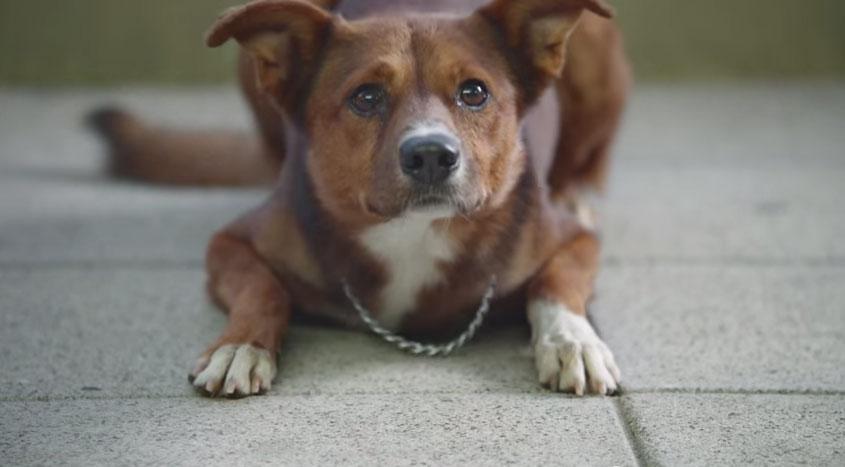 這隻狗狗的主人送醫但還是沒能救活,但他等在門口居然真的等到「主人」出來了!