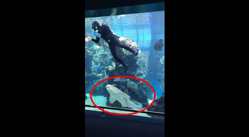 水族館鯊魚