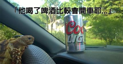 他的女友出國前千叮萬囑請他要好好照顧她的小陸龜,結果他寄了這些照片給她看...