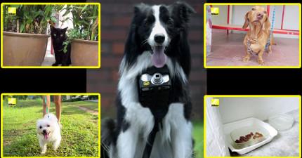 Nikon設計了這款只要狗狗一興奮就會按下快門的「狗狗相機」,利用它拍下狗狗眼中最快樂的畫面。