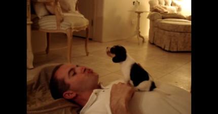 主人教小獵犬咆哮時的景象,可愛到讓人想要躺在地上打滾!