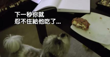 當這隻狗狗想要吃人類的東西時,他求你使出的絕招一定會讓你秒投降!