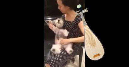這隻狗兒居然就是最棒的琵琶!怎麼會這麼好看?!