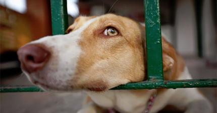10種小症狀,讓你知道馬上檢查家裡狗狗是否不小心得到了致命的癌症!