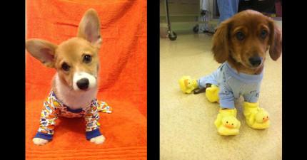 27個已經把可愛帶到另一個危險境界的睡衣狗狗。