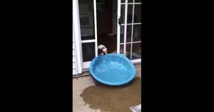 這隻狗狗太愛他的游泳池了,到哪裡都一定要帶著走...但想要拖到家裡時我就笑垮了!