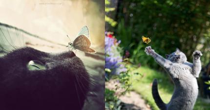 15個蝴蝶和動物的合影瞬間,證明迪士尼夢幻世界離我們一點都不遠!