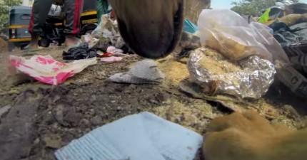 動保組織幫流浪狗戴上隱藏攝影機拍下日常生活...從他們的眼裡有些人類真的比野獸還可怕。