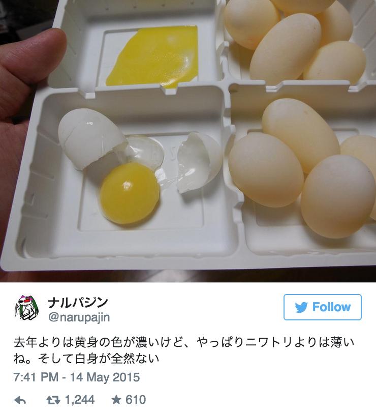 這隻烏龜開始下蛋時,她的主人就決定以「高溫」來表現對寵物蛋的愛?!