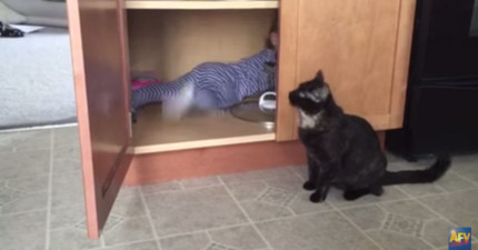 這隻貓咪已經忍受不了家裡的人類小孩子一直拉他尾巴,看看他接下來做的超陰險事情!
