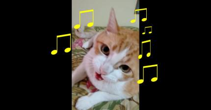 這隻貓咪跟他的主人一起唱兒歌只唱3句,但每一句都會爆可愛到偷走你的心。