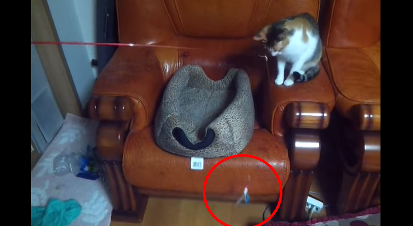 在你看到誰在另一邊跟這隻貓咪玩的時候,你就會發現人類的末日已經不遠了。