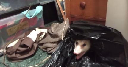 她想要把垃圾袋中的超兇惡魔負鼠趕走,結果在2:38看到了最可愛的景象!