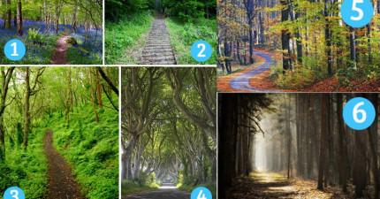請從這6個森林中選出一條路,這將會透露出你內心性格!