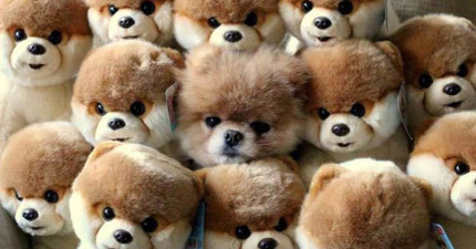 25隻學會隱身術的忍者狗狗,你有辦法找出他們在哪裡嗎?
