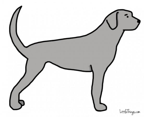11張「狗狗尾巴動作圖」讓你完全了解狗狗到底想要跟你說什麼。