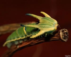 15張最美的毛毛蟲變身成蝴蝶後的驚豔照片,才看到#3我就臣服在大自然底下了...