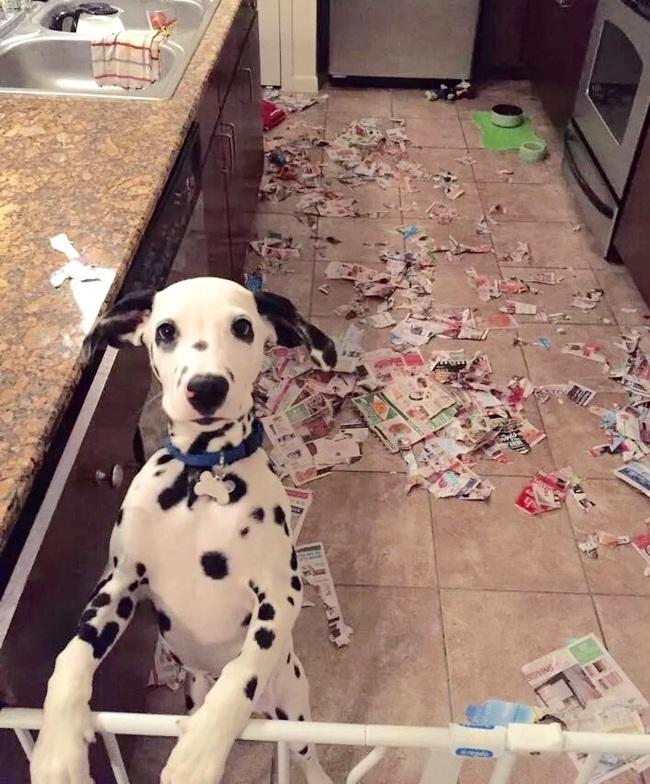 32隻做壞事當場被抓到但「發誓真的不是他們幹的」的驚慌寵物。