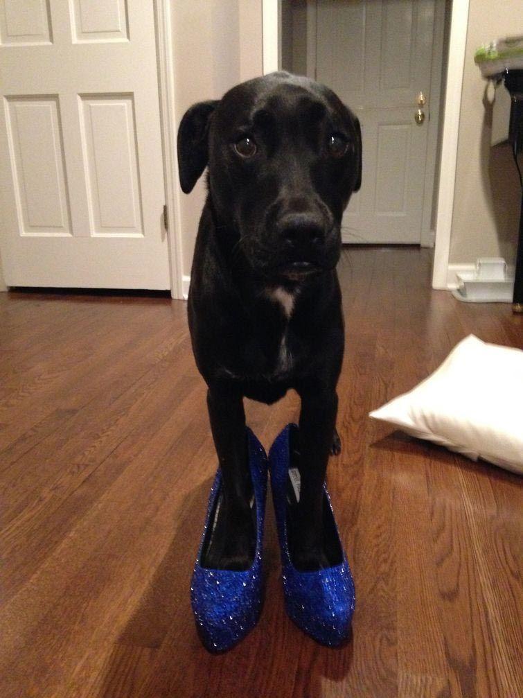 topánky vyrobené s ich rukami, topánky za 6000 za $ 40, prerobený topánky, ples topánky s rukami