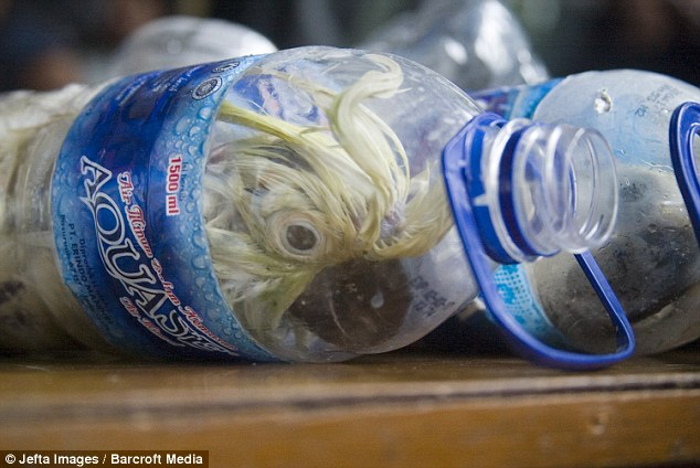 印尼警方破獲一起可惡至極的走私案件...寶特瓶裡居然裝了比熊貓還珍貴的物種!?