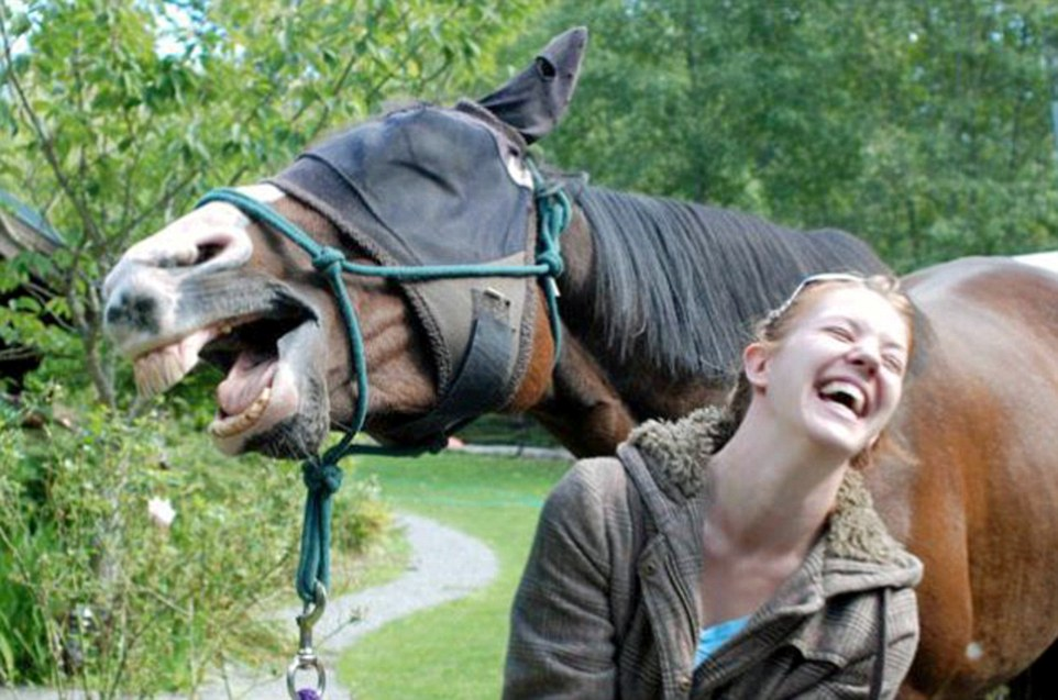 Why did the horse cross the road? Because someone called out 'hey!': A giggling gelding perfects this moment with his owner, who is in hysterics