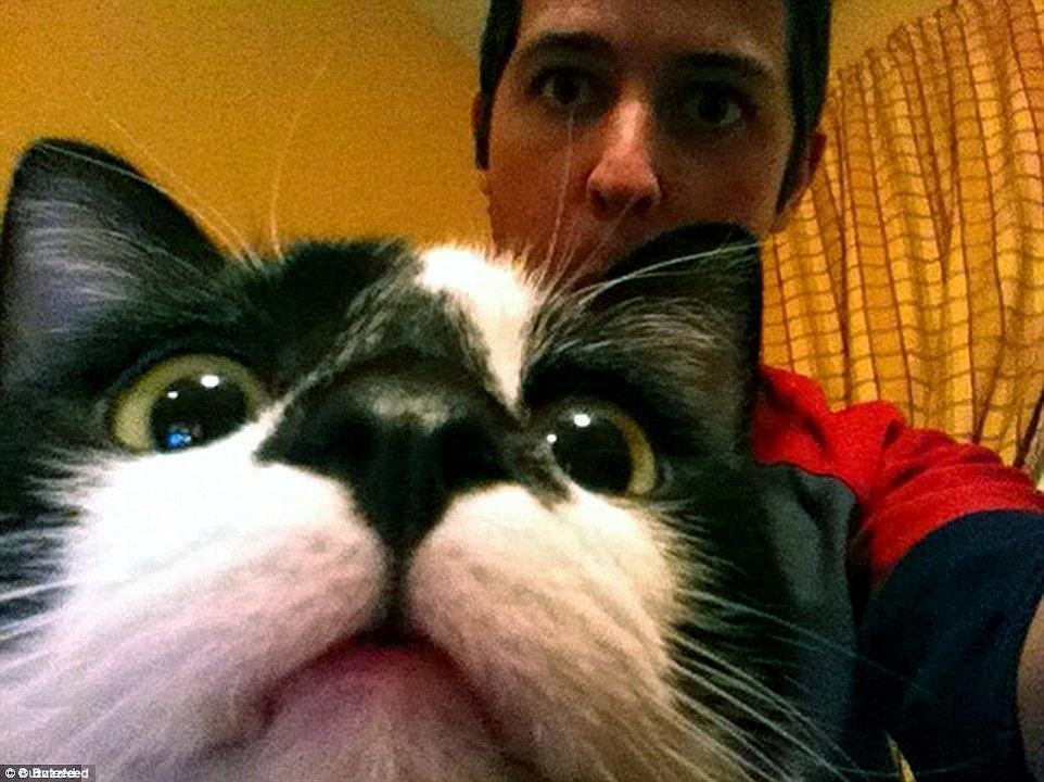 I'm ready for my close up: A cat gets up close and personal for a photo with his owner