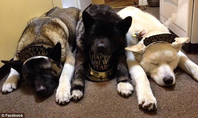 主人原以為這隻雙眼移除的狗狗會從此行動不便,沒想到她兩個兄弟開始全天候出入都跟在她身邊照料!