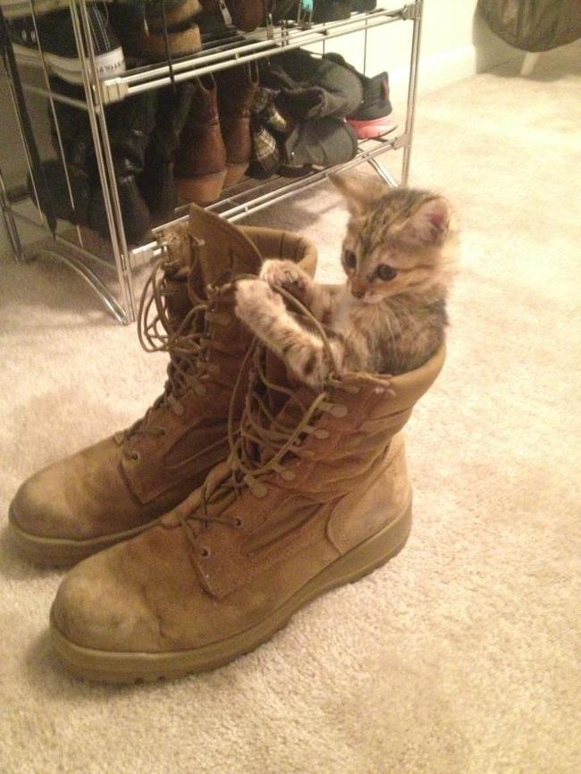12隻對你的鞋子一點抵抗力都沒有的「鞋癮貓咪」。