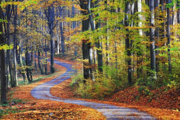 「6個森林」中直覺選出一條路 將會透露出你內心性格!