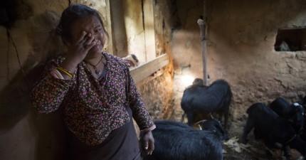 在尼泊爾大地震後,很多的難民就算無家可歸也不肯離開他們心愛的動物家人。