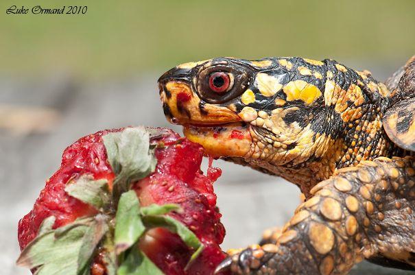 16隻小動物明明只是在吃莓果,但卻看起來像是吃掉你大腦的怪獸。