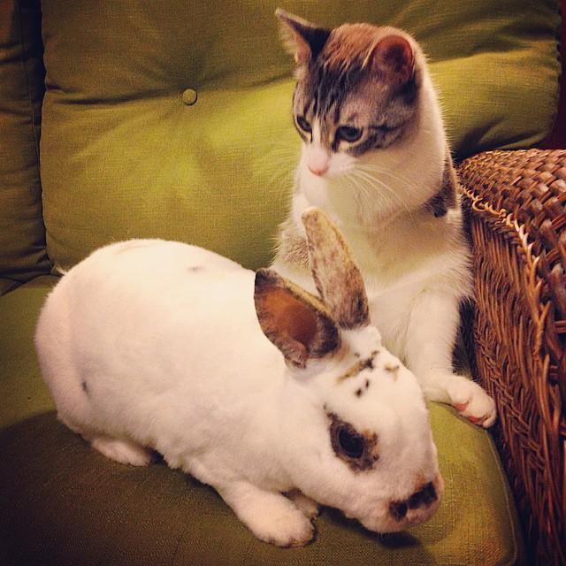 只有兩條腿的爆紅「小兔貓咪」,追趕跑跳碰的樣子會征服融化你的心!