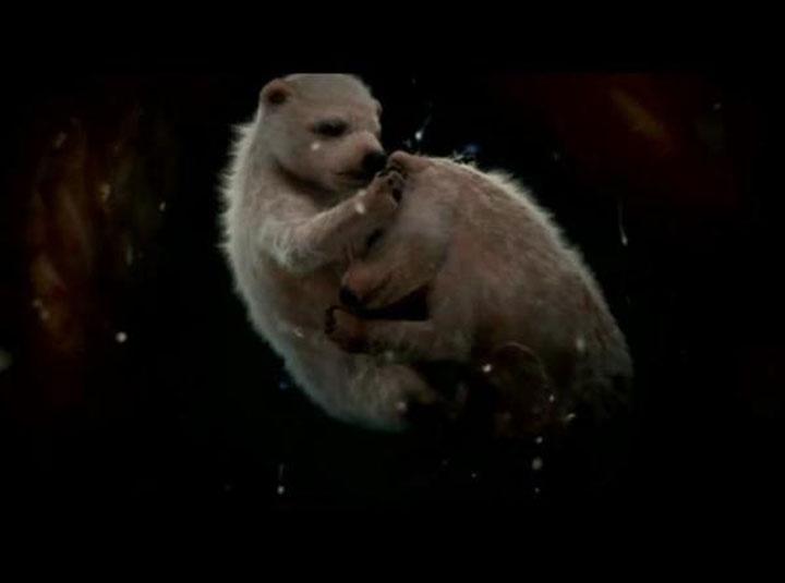12隻未出生的動物胎兒在他們媽媽的肚子裡。太驚奇了...特別是海豚寶寶!